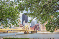 Pittsburgh skyline under trees on the North Shore in spring