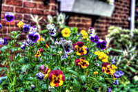 Flower in the garden in HDR