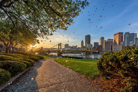 Flower petals fall on the North Shore of Pittsburgh at dawn