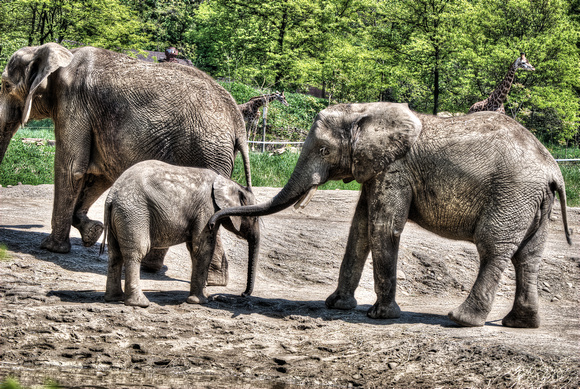 Mother and Baby Elephant at the Pittsburgh Zoo