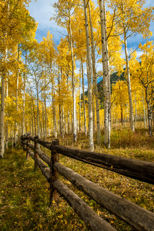 A fence post leads through the trees in Colorado