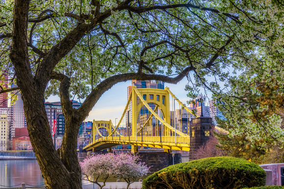 A tree on the North Shore frames the Clemente Bridge in spring in Pittsburgh