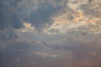 Geese fly into the sunrise in PIttsburgh
